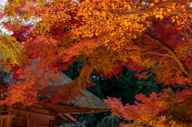 colored leaves with temple